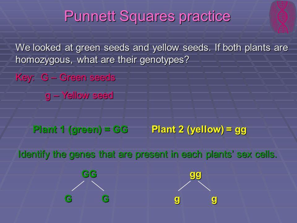 Punnett Squares practice