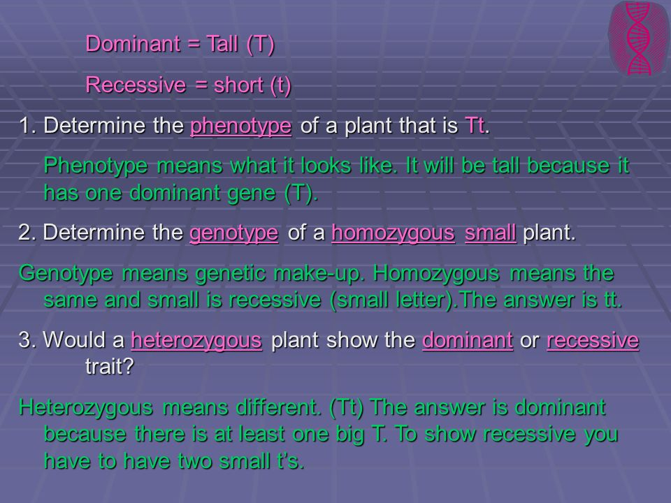 Dominant = Tall (T) Recessive = short (t)
