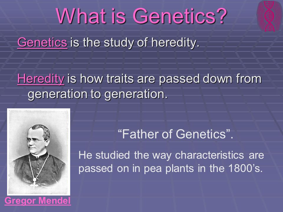 What is Genetics Genetics is the study of heredity.