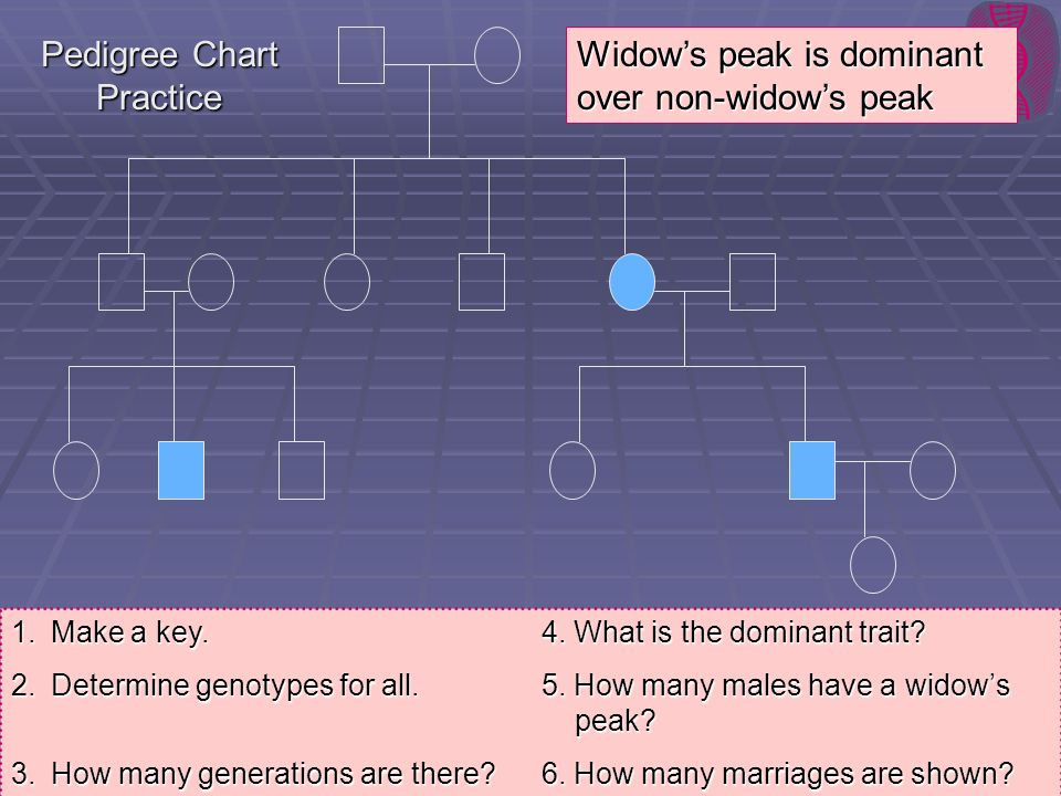 Pedigree Chart Practice