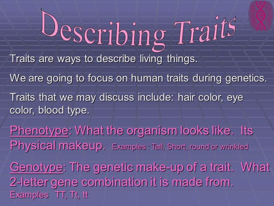 Describing Traits Traits are ways to describe living things. We are going to focus on human traits during genetics.