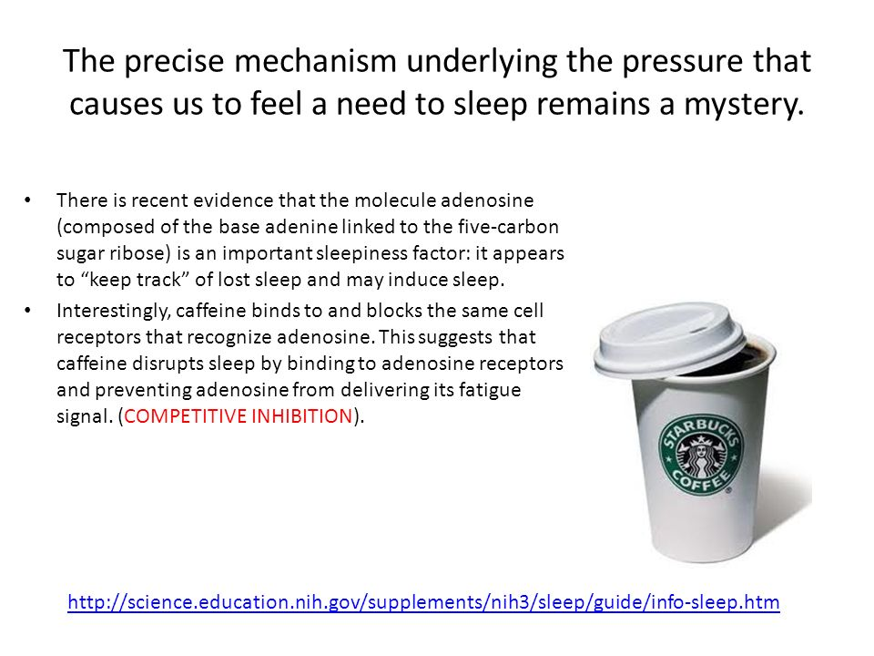 The precise mechanism underlying the pressure that causes us to feel a need to sleep remains a mystery.