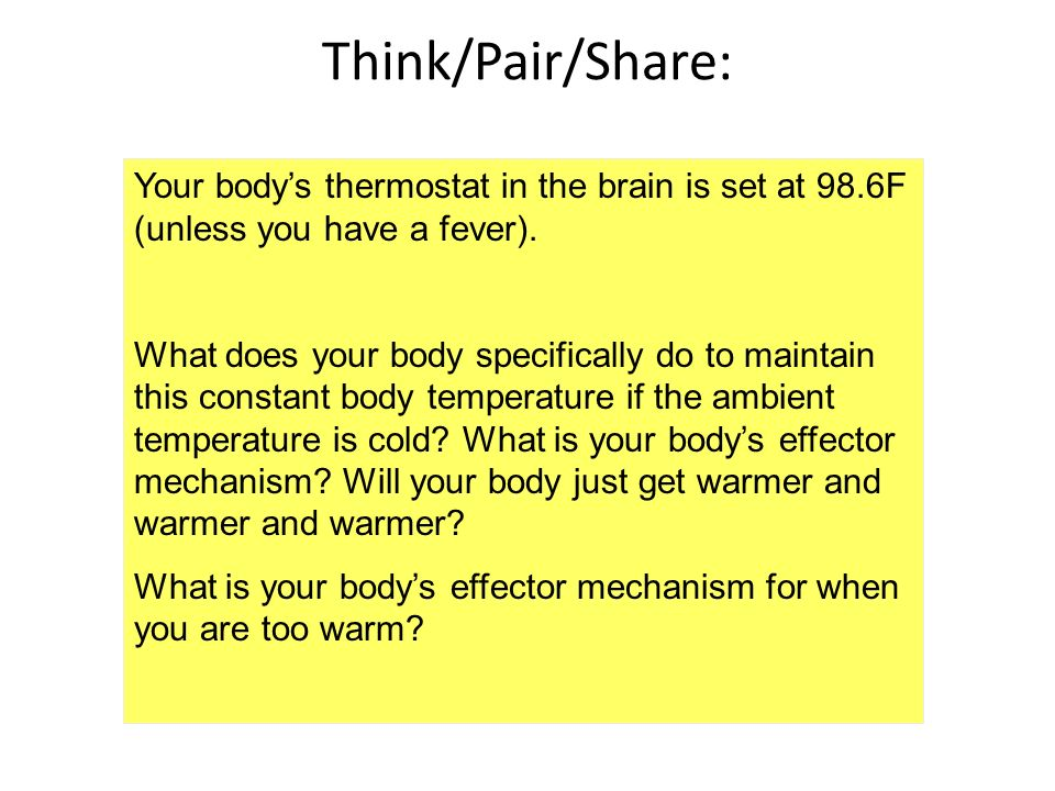 Think/Pair/Share: Your body's thermostat in the brain is set at 98.6F (unless you have a fever).