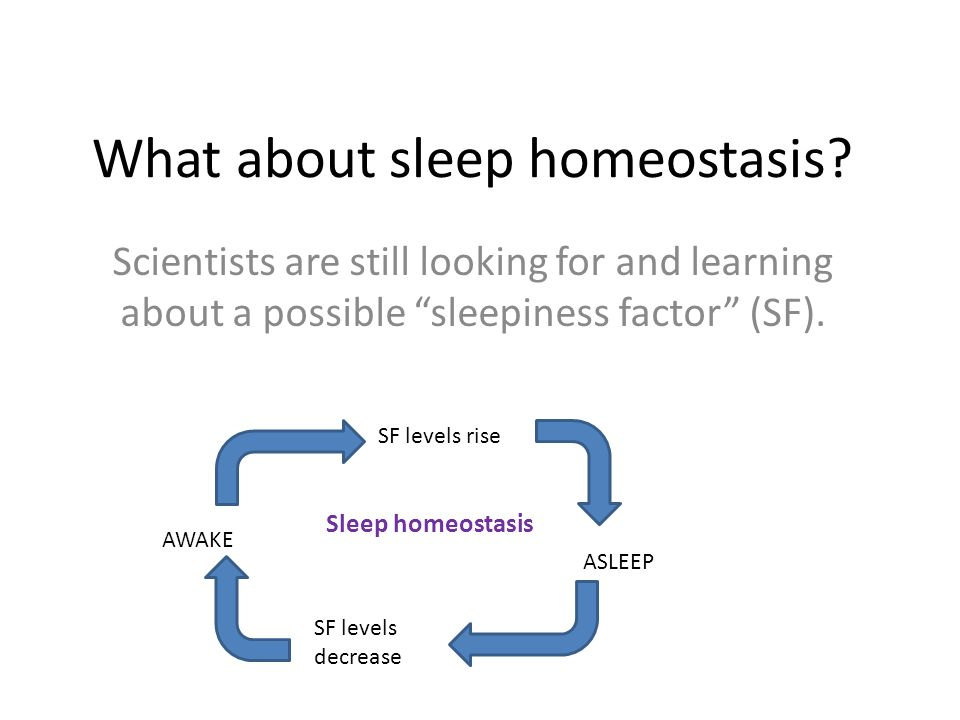 What about sleep homeostasis