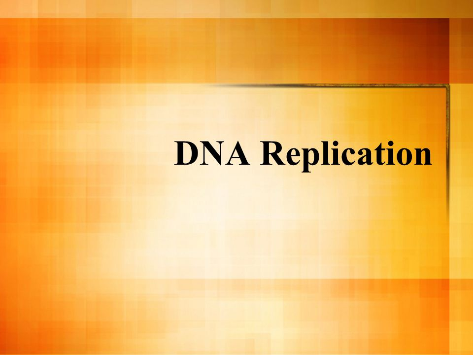 DNA Replication Ask why, when, and where they think replication occurs.