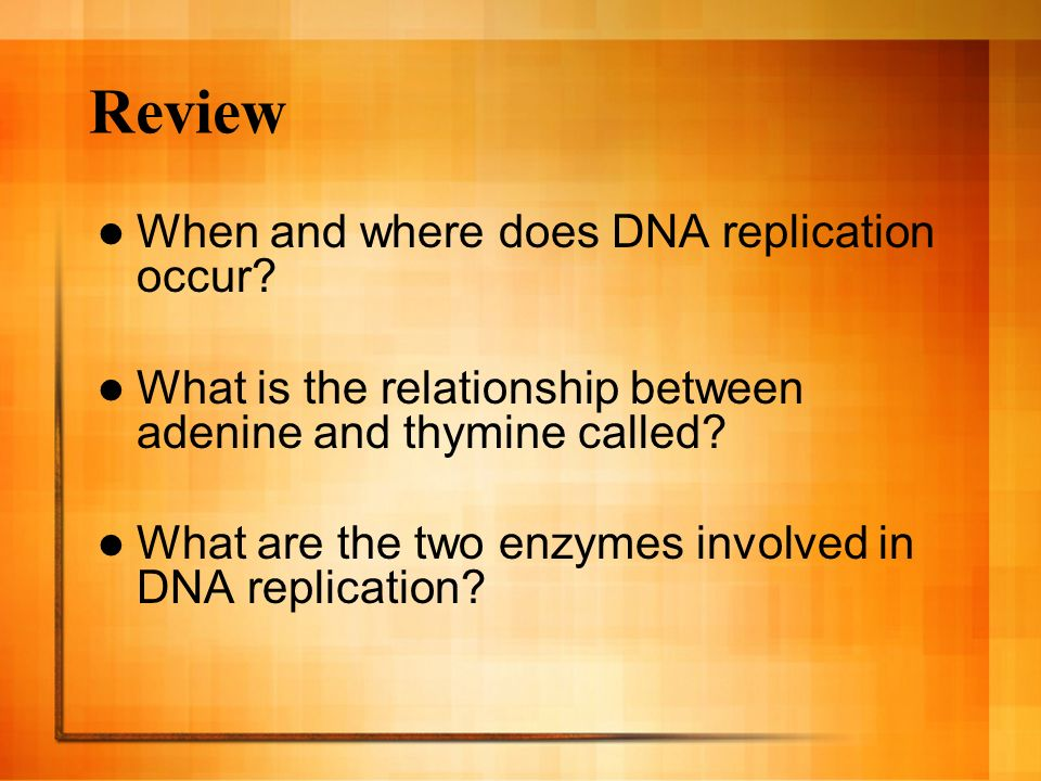 Review When and where does DNA replication occur