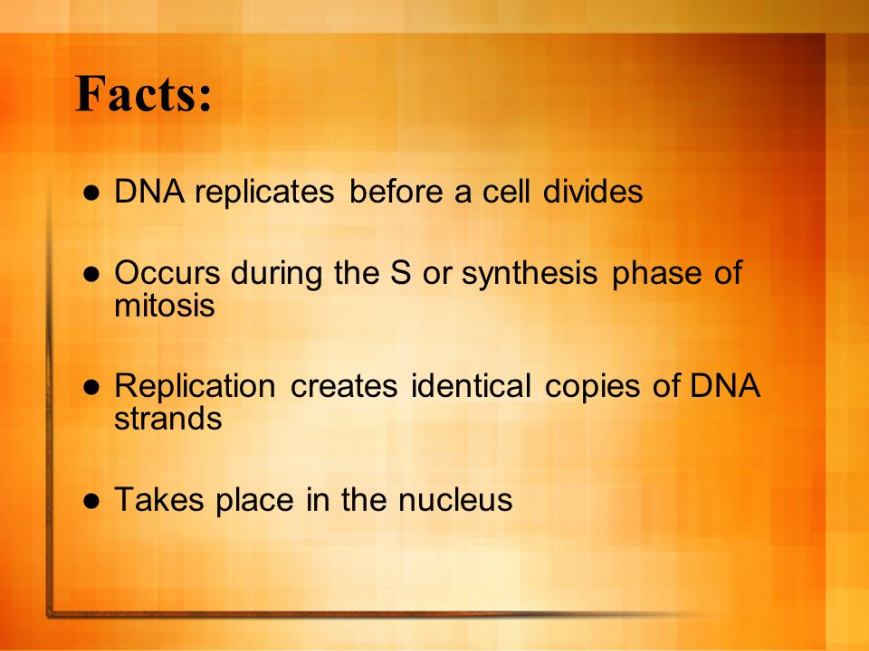 Facts: DNA replicates before a cell divides