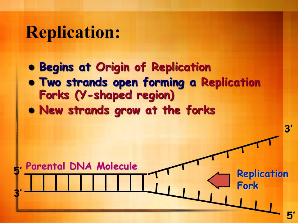 Replication: Begins at Origin of Replication