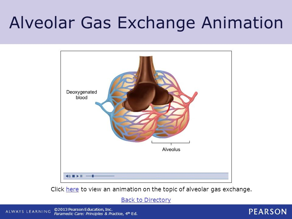 Alveolar Gas Exchange Animation