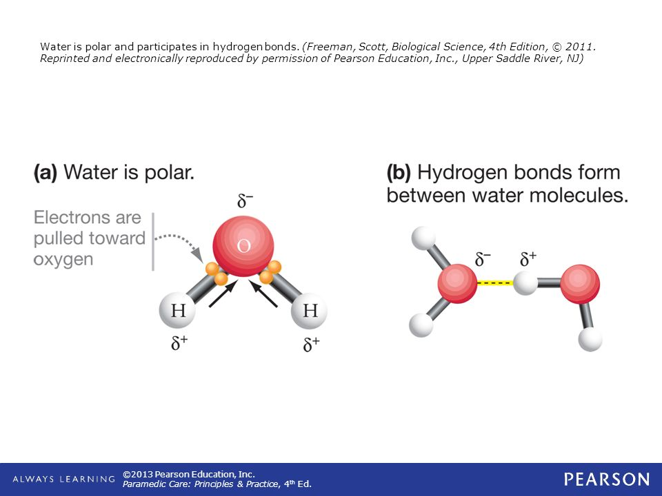 Water is polar and participates in hydrogen bonds