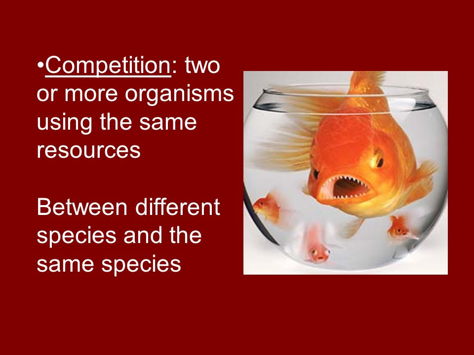 Competition: two or more organisms using the same resources