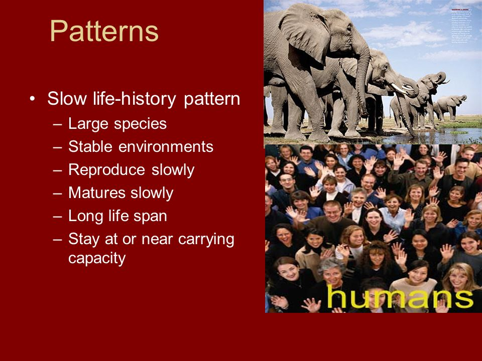 Patterns Slow life-history pattern Large species Stable environments