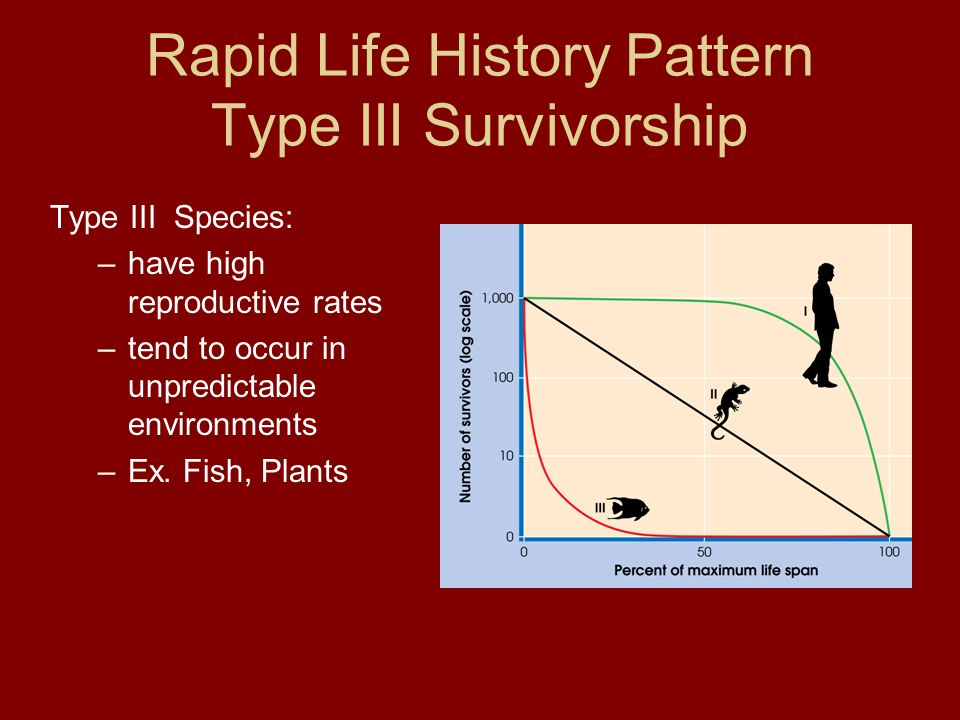 Rapid Life History Pattern Type III Survivorship