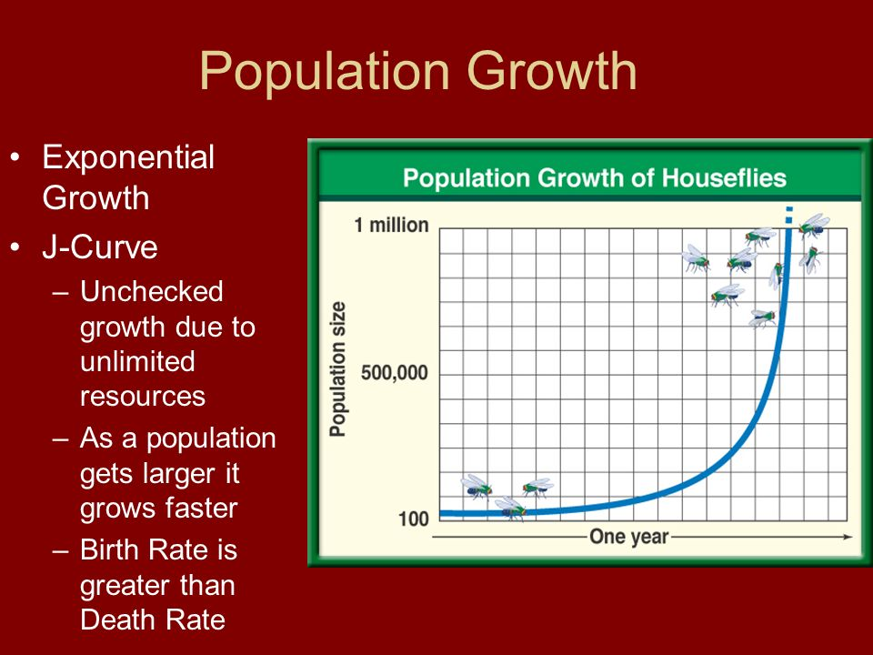 Population Growth Exponential Growth J-Curve