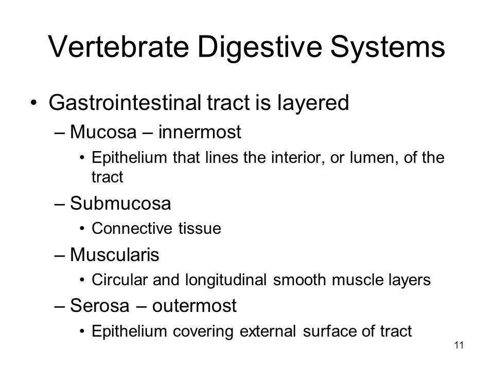 Vertebrate Digestive Systems
