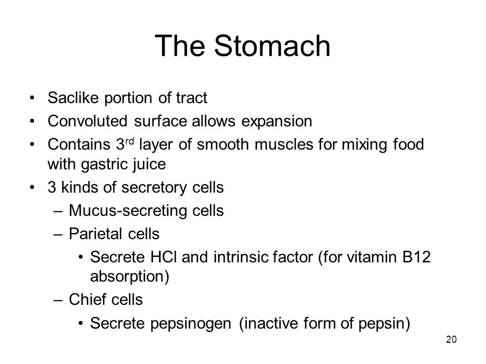The Stomach Saclike portion of tract