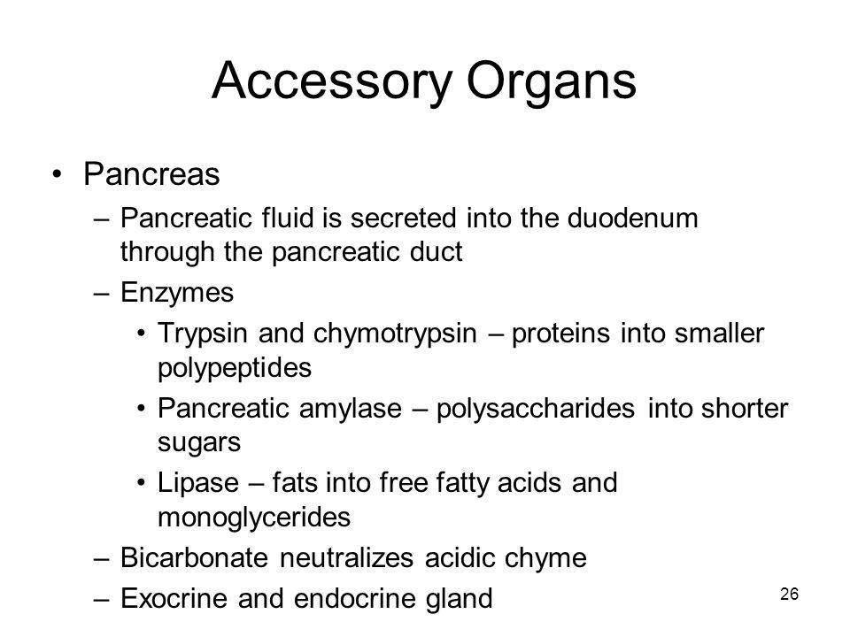 Accessory Organs Pancreas