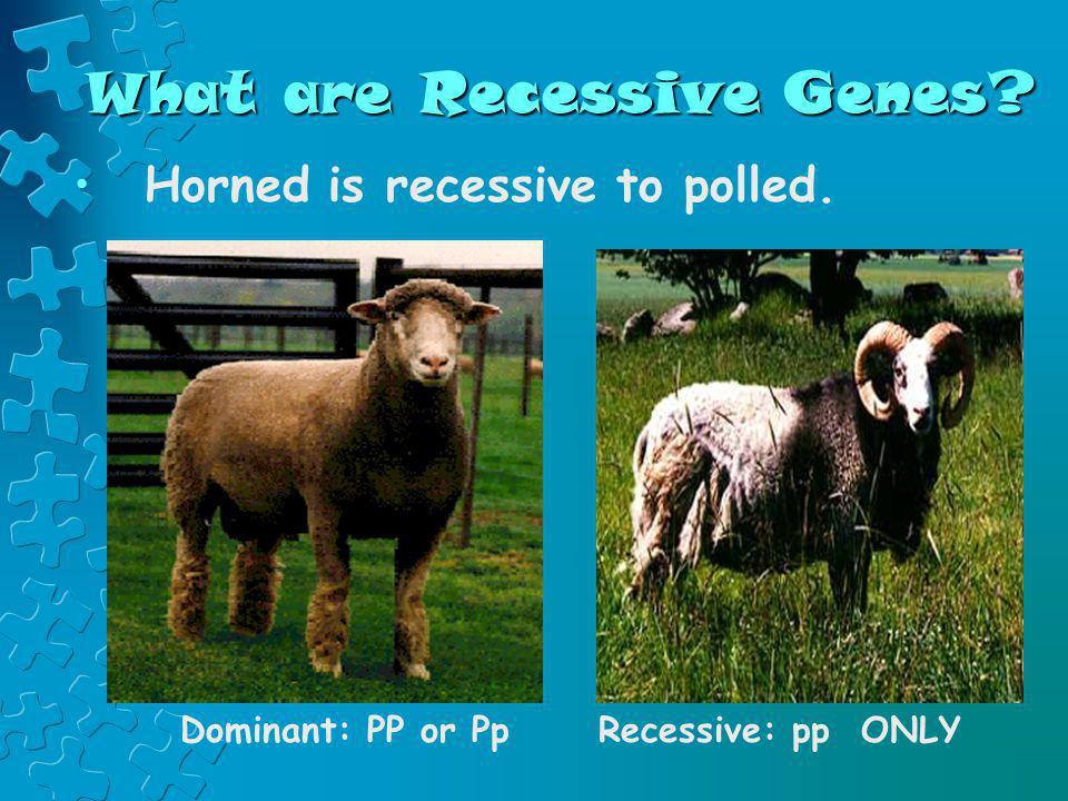 What are Recessive Genes