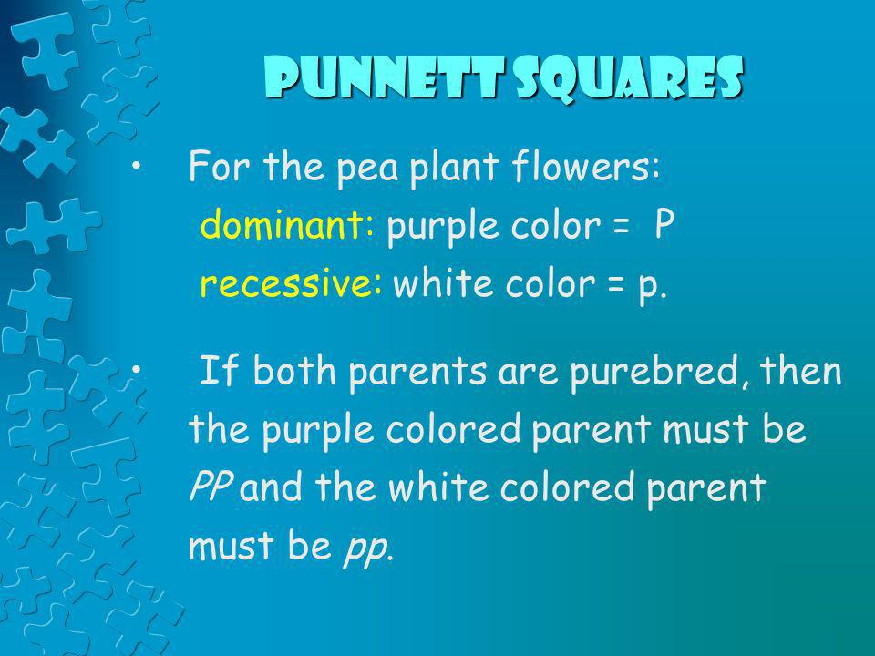 Punnett Squares For the pea plant flowers: dominant: purple color = P
