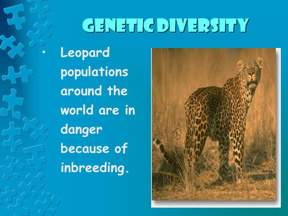 Genetic Diversity Leopard populations around the world are in danger because of inbreeding.