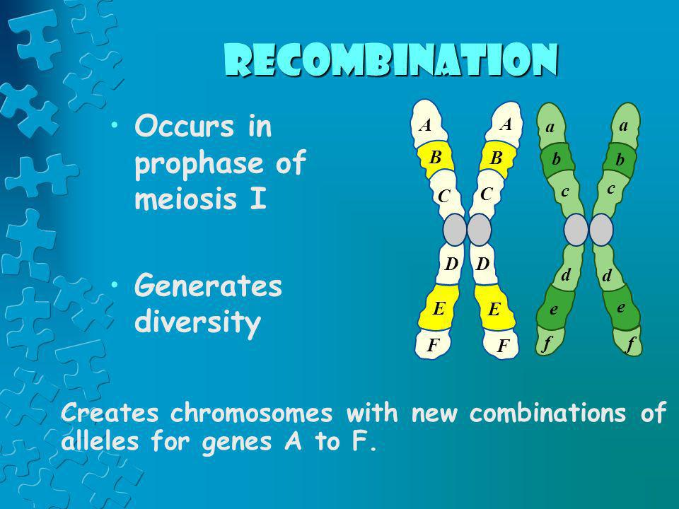 recombination Occurs in prophase of meiosis I Generates diversity