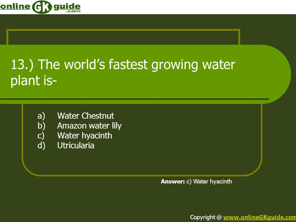 13.) The world's fastest growing water plant is-