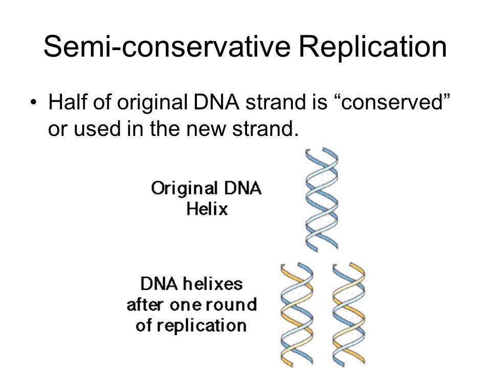 Semi-conservative Replication