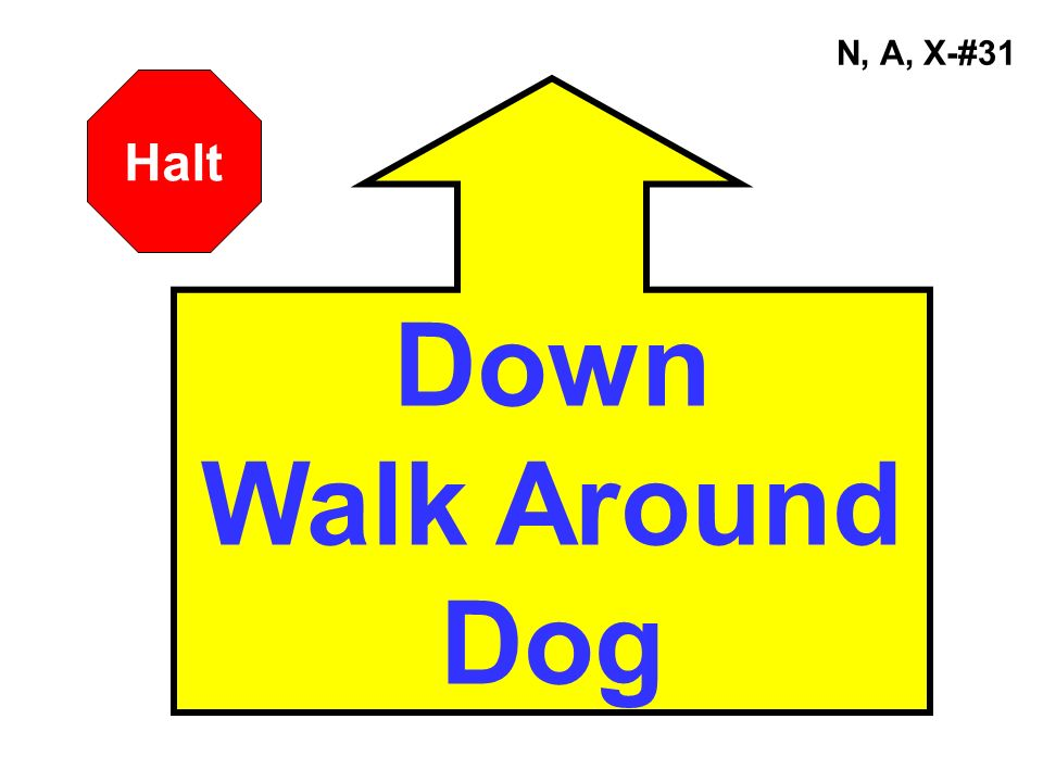 N, A, X-#31 Halt Down Walk Around Dog