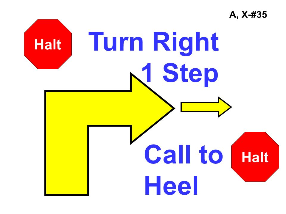 A, X-#35 Halt Turn Right 1 Step Halt Call to Heel