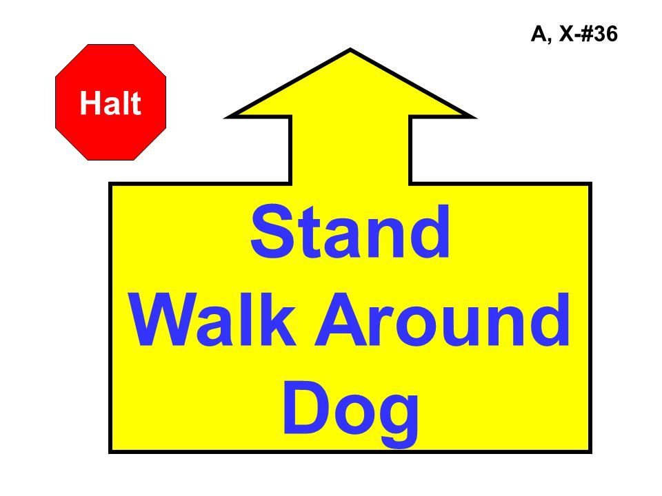 A, X-#36 Halt Stand Walk Around Dog
