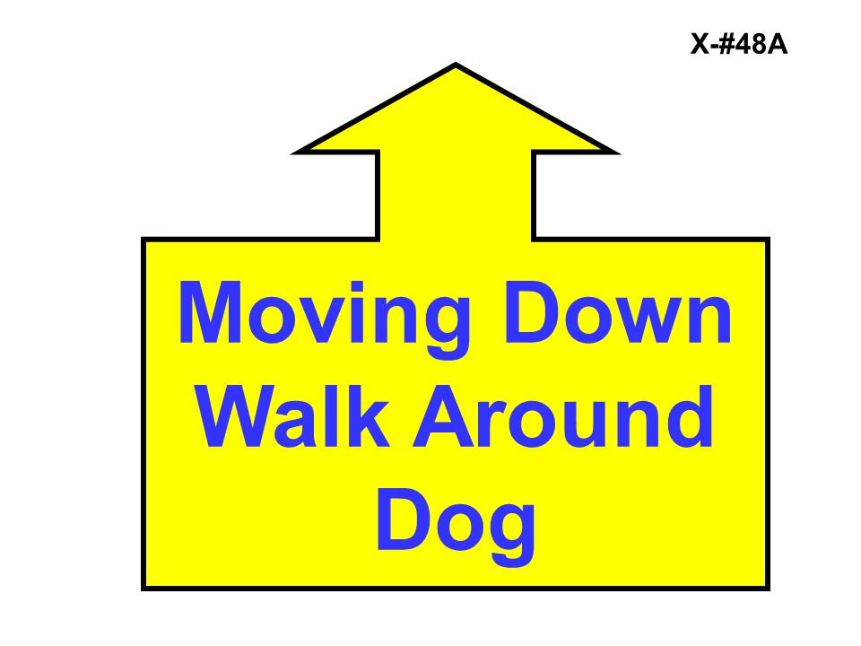 Moving Down Walk Around Dog