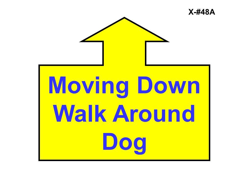 Moving Down Walk Around Dog