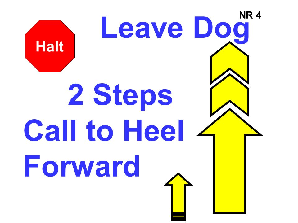 Leave Dog NR 4 Halt 2 Steps Call to Heel Forward