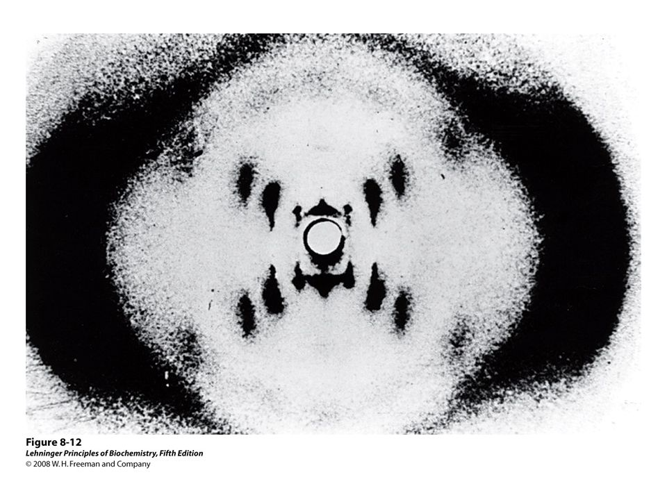 FIGURE 8-12 X-ray diffraction pattern of DNA
