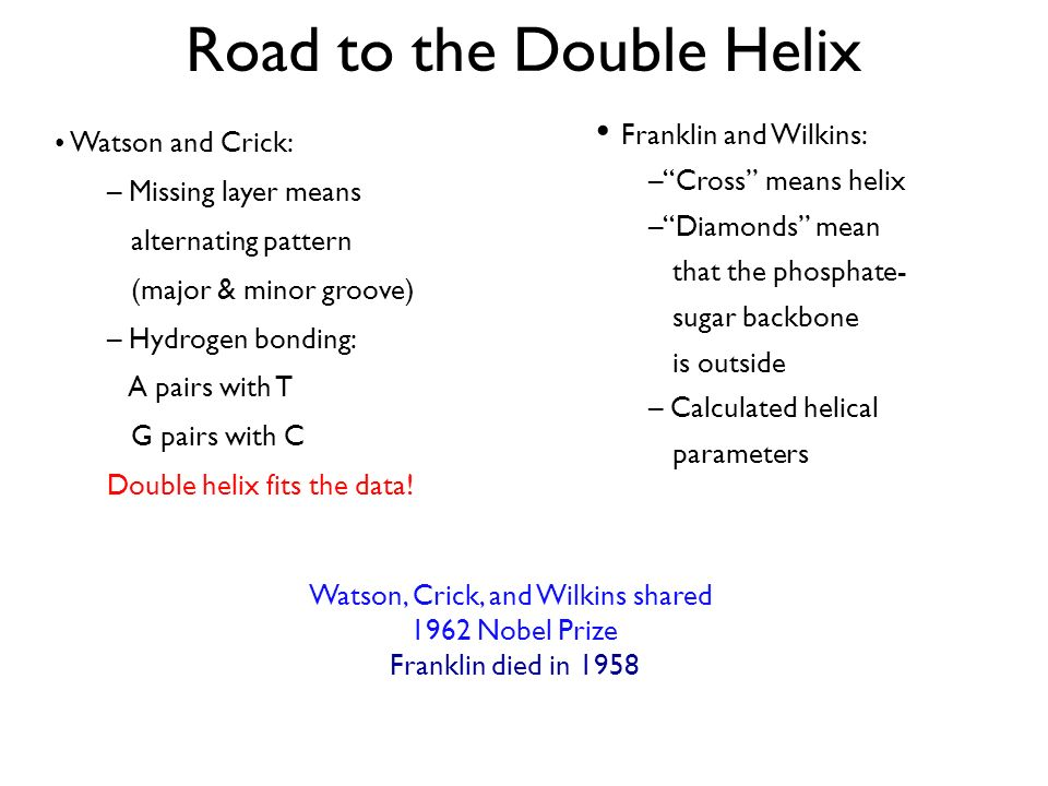 Road to the Double Helix