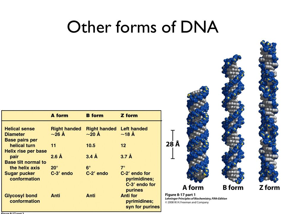 Other forms of DNA