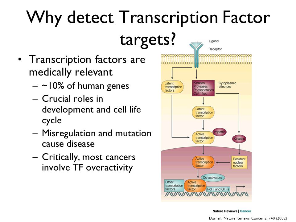 Why detect Transcription Factor targets