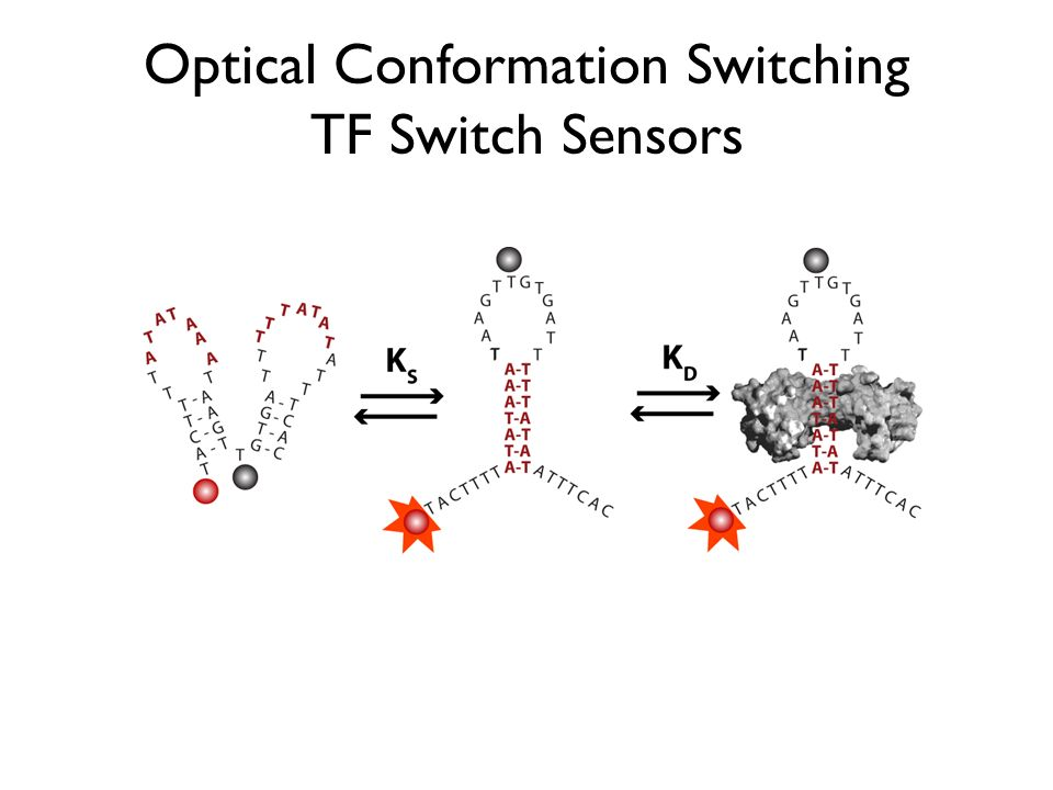 Optical Conformation Switching TF Switch Sensors