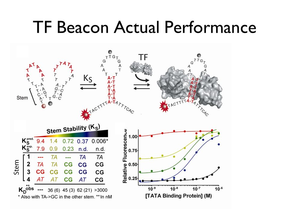 TF Beacon Actual Performance