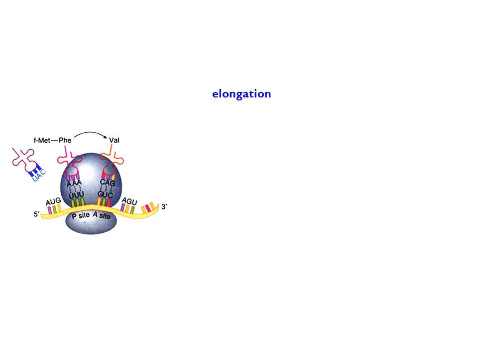 elongation