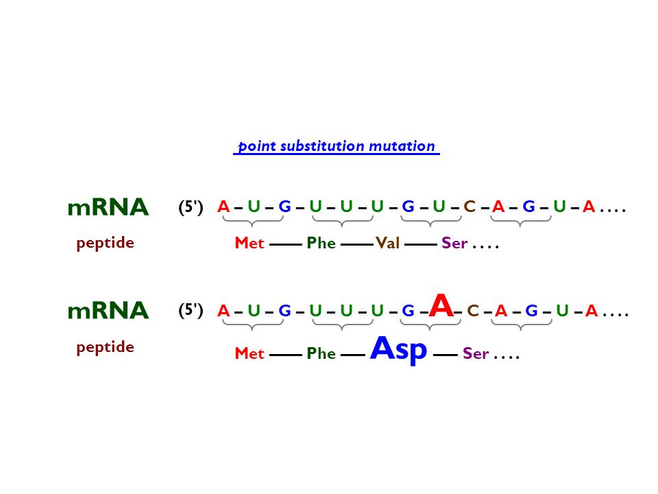 mRNA mRNA point substitution mutation (5 )