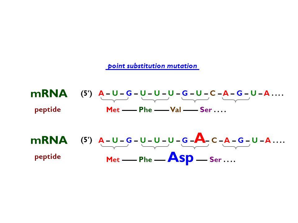 mRNA mRNA point substitution mutation (5 )