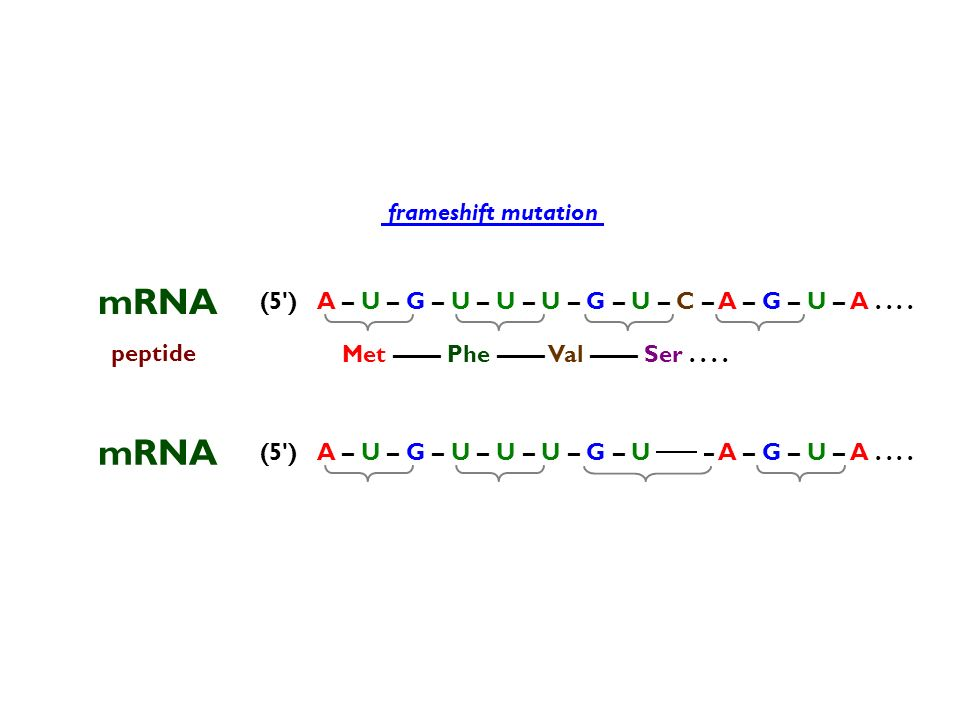 mRNA mRNA frameshift mutation (5 )