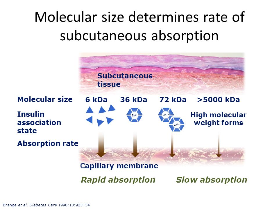 Molecular size determines rate of subcutaneous absorption
