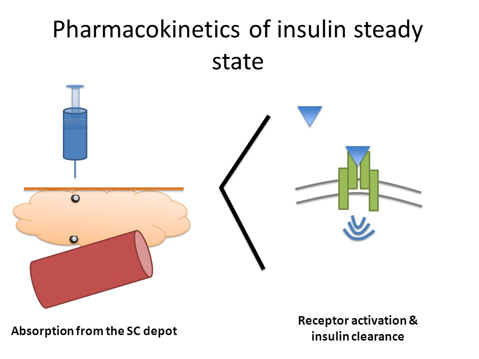 Pharmacokinetics of insulin steady state