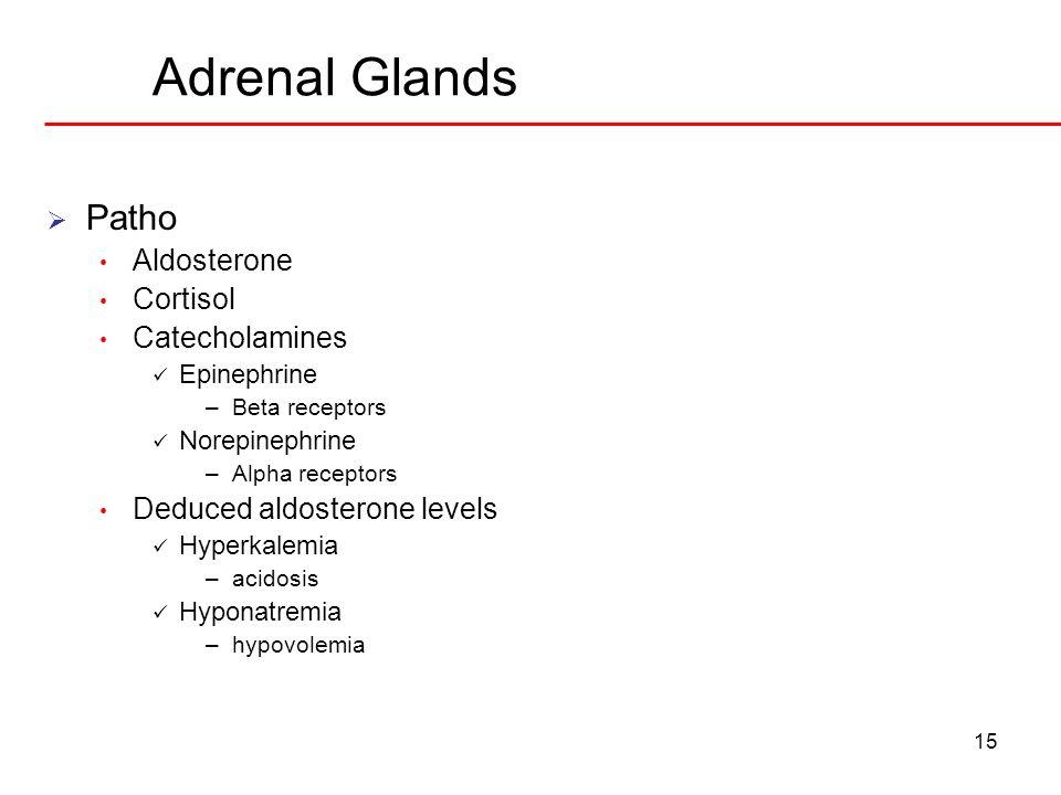 Adrenal Glands Patho Aldosterone Cortisol Catecholamines