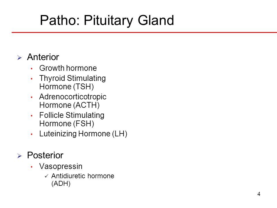 Patho: Pituitary Gland