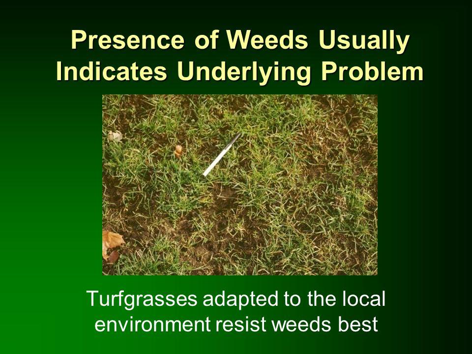 Presence of Weeds Usually Indicates Underlying Problem