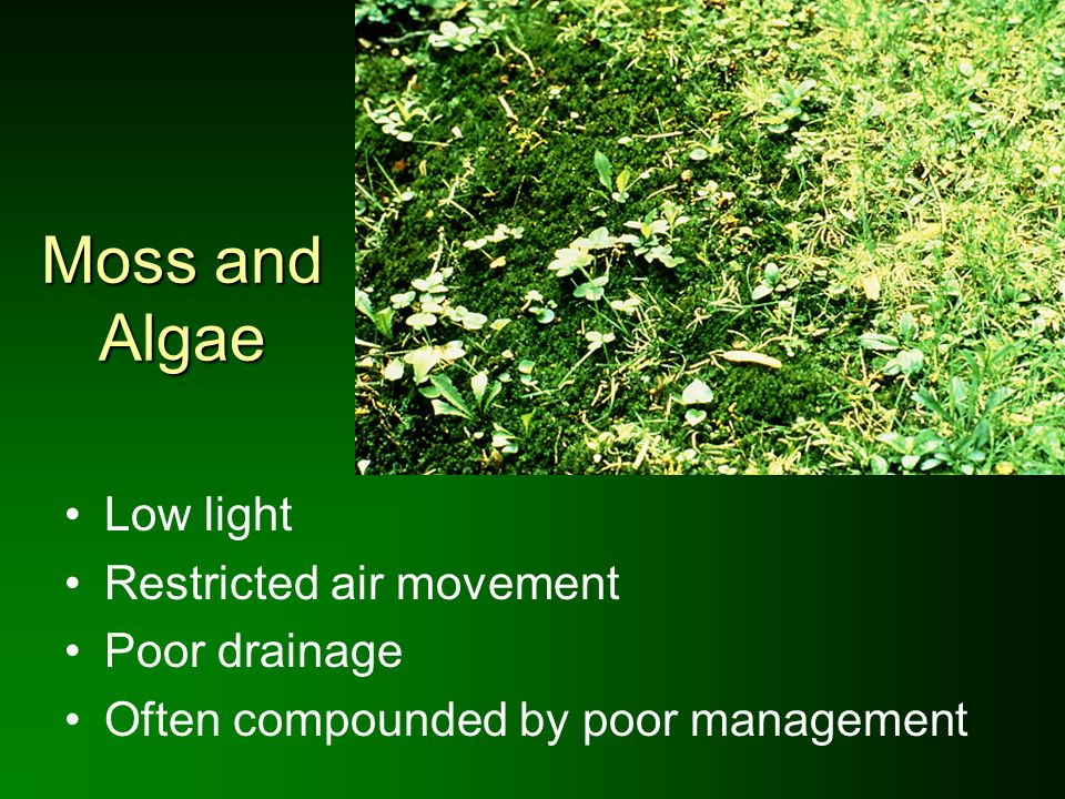 Moss and Algae Low light Restricted air movement Poor drainage