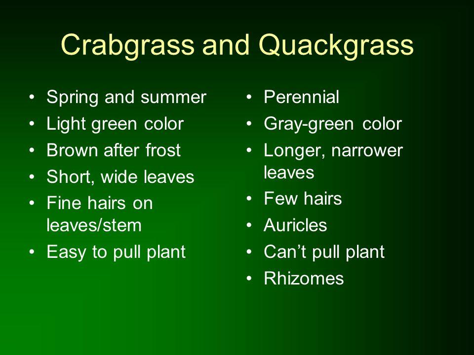 Crabgrass and Quackgrass